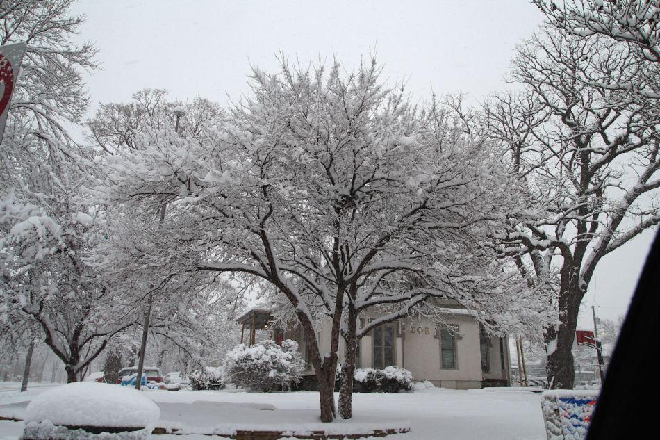 First Snow © Andor (2)