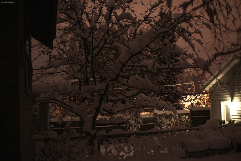 The Apple Tree Topped With Snow  © Andor