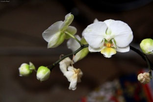 Orchids © Andor (1)