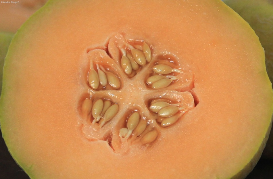 Minnesota Midget Melons © Andor (3)