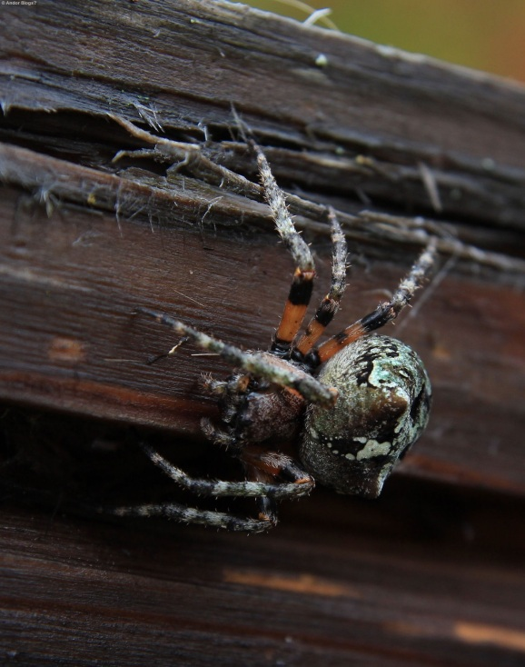 Gnarly Spider (1)