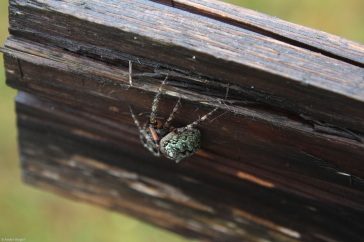 Gnarly Spider (2)