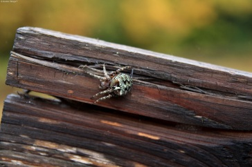 Gnarly Spider (3)