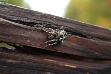 Gnarly Spider (4)
