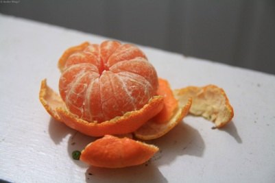 First Satsuma Mandarin of 2013 © Andor (2)