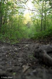 A Walk in Locke Park © Andor (1)
