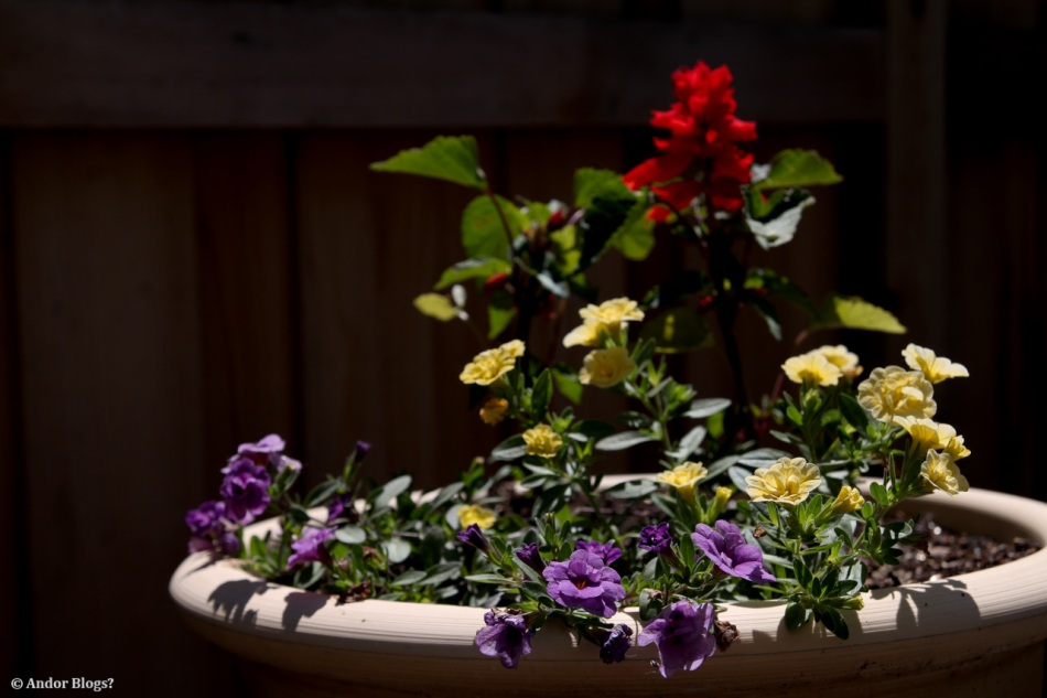Potted Assortment © Andor