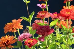 My Friend's Flowers © Andor(2)
