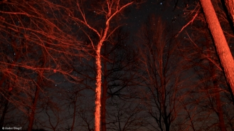 Night Sky © Andor (3)