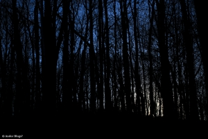 Wandering in the Forest © Andor(2)