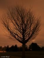 Como PArk at Night © Andor(3)